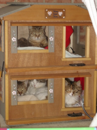 Cozy Cat Furniture - Our cats just love their Outdoor Bungalow from ...